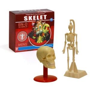 Educatief leren over het skelet